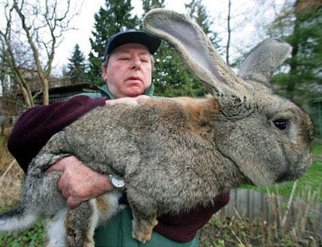 The Easter Rabbit Is Here Big Other